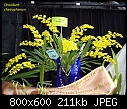-oncidium-cheirophorum.jpg