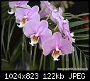 "Test of Orchid Pix [2/2] - ""IMG_3323.jpg"" yEnc-img_3323.jpg"