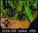 -maxillaria-schunkeana-hanging-gardens-2.jpg