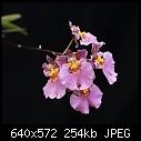 -onckittycrockerrosewings-xrosegiant-1538-00803.jpg
