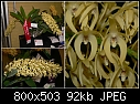 QOS Show - Cedarvale D. speciosum var. curvicaule-d-speciosum-curvicaule.jpg