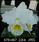 Blc Bob Betts 'Snowflurry'-bobbetts.jpg