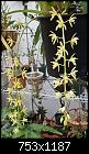 -cym-aloifolium-159.1-01257.jpg