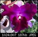 -bc-maitland-xlc-lisaann-1046-01268.jpg