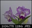 -lc-angelhearthihimanu-852-01271.jpg