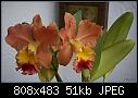 -blc-goldenzelleorangepumkin-938-01442.jpg