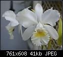 -c-henrietta-japhet-345-01447.jpg