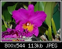 Blc. Pink Empress 'Lake View'-blc.-pink-empress.jpg