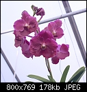 -vanda-fuchs-fortune-1441a-01860.jpg