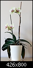 Orchid give away - because of moving-orchid1.jpg