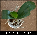 Orchid give away - because of moving-orchid2_closeup.jpg