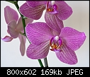 Orchid give away - because of moving-orchid4_closeup.jpg