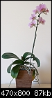 Orchid give away - because of moving-orchid5.jpg