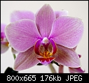 Orchid give away - because of moving-orchid5_closeup.jpg