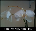 New orchid owner, plant already dying. ]:-iphone-again-078.jpg