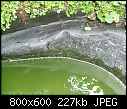 How to Clean Our Pond?-pond2.jpg