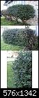 Help Identify My Shrub-texas-shrub-rwt.jpg