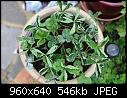 Strawberry Plant Problem-dpp_10017.jpg