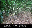 Dying Laurel Hedge-014.jpg