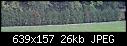 conifer hedge turning brown problem-dsc00312%5B1%5D.jpg